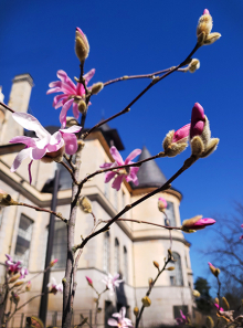 spring blooms outside Denny Hall