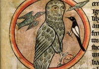 owl from medieval bestiary